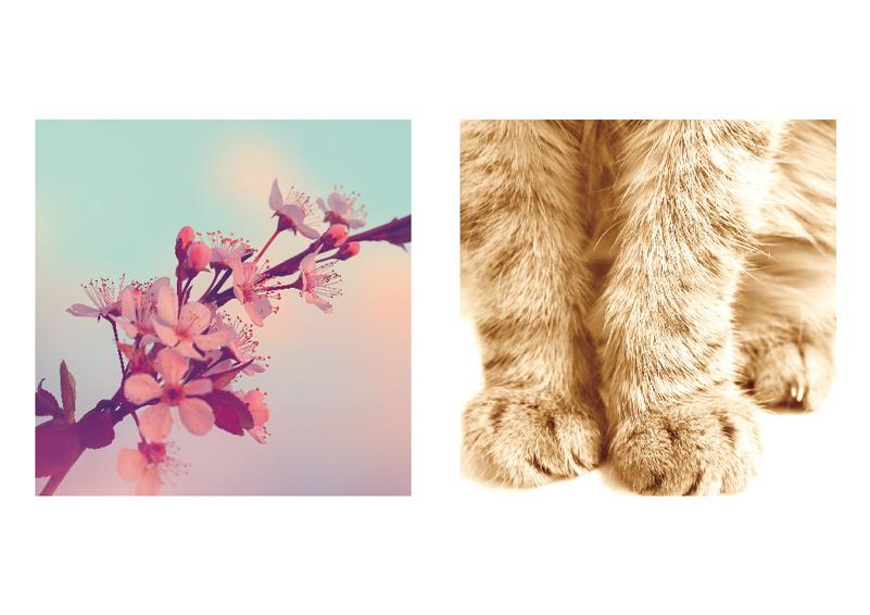 桜とうちの猫の画像